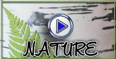 Nature Videos